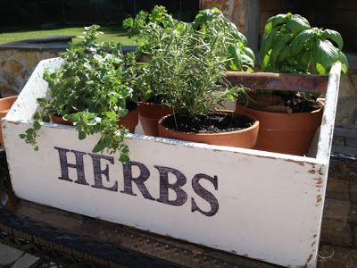 Diy Herb Garden Box Planter From An Old Toolbox Pottery Barn