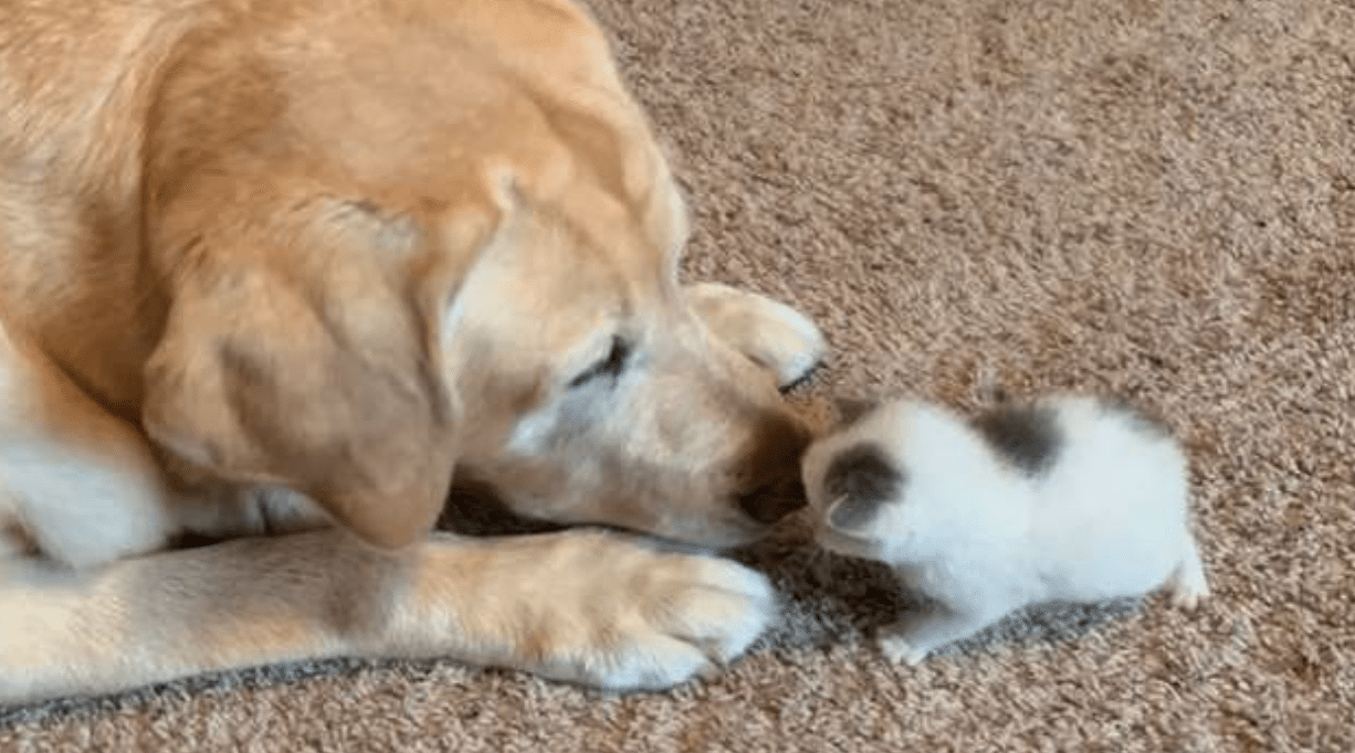 Stray Kitten Finds Forever Home After Family S 12 Year Old Dog Adopts Her In 2020 Newborn Kittens Old Dogs Dogs