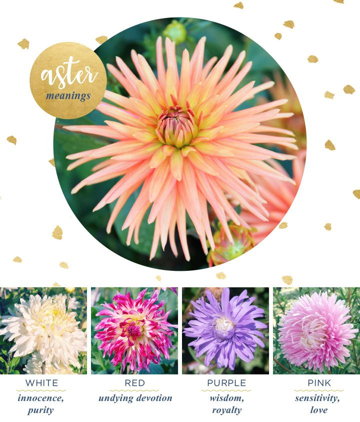 Aster Meaning And Symbolism Ftd Com Flower Meanings Flower Petal Art Aster Flower Tattoos