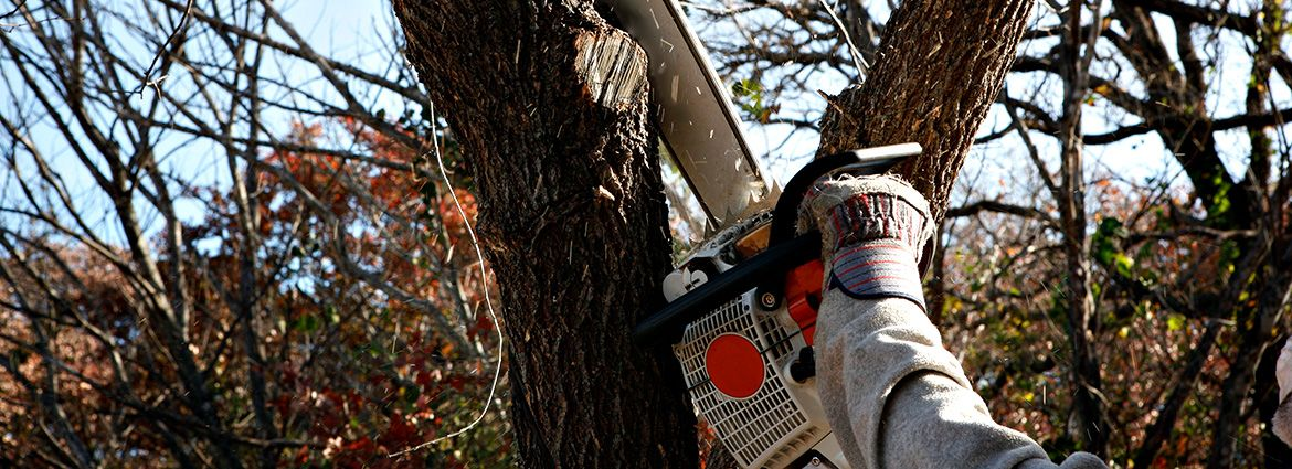 Tree Removal Do's & Don'ts that You Must Know Tree