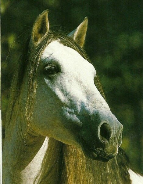 Horse Face Anatomy Google Search Animals Pinterest Face