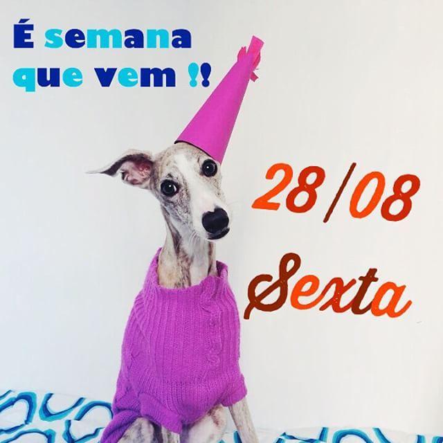 It's next week!! #instadog #instawhippet #ilovemywhippet #whippet #yuki #play #park #dogpark #dogoftheday #partydog #party #birthday #birthdaydog #birthdaywhippet by _yuki_nim