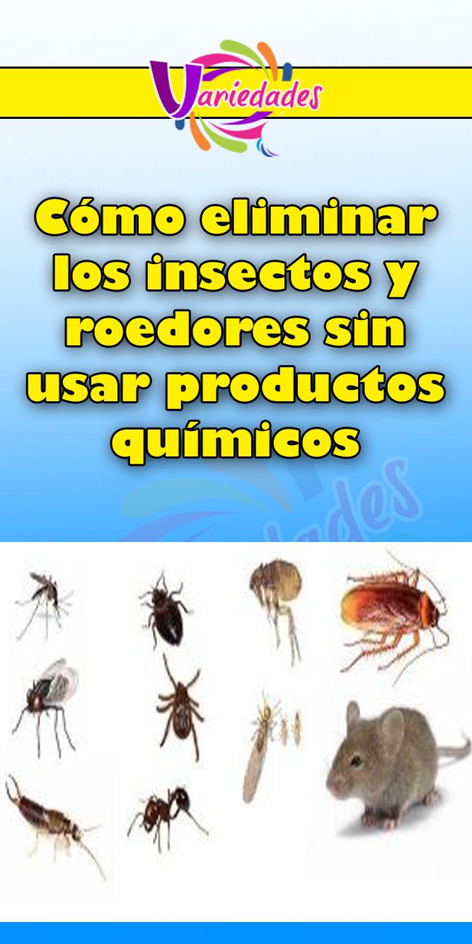 Como Acabar Con Las Ratas En El Jardin Como Eliminar Los Insectos Y Roedores Sin Usar Productos Quimicos