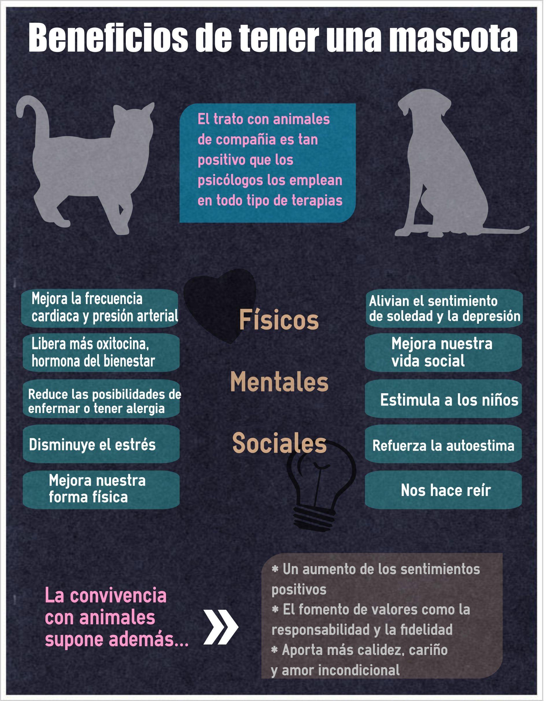 10 razones por las que tener una mascota en casa es bueno - Mascotas originales para tener en casa ...