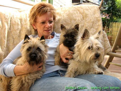 Pin By Susan Gatier On Cairns In 2020 Cairn Terrier Terrier Dogs