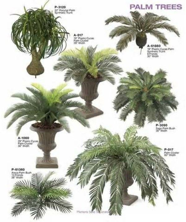 Palm Tree Types As Houseplants Hardy Exotic Solutions Fresh