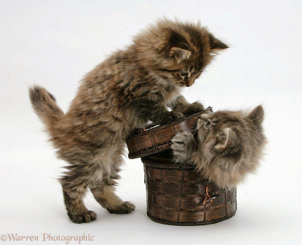 Pin di Cats