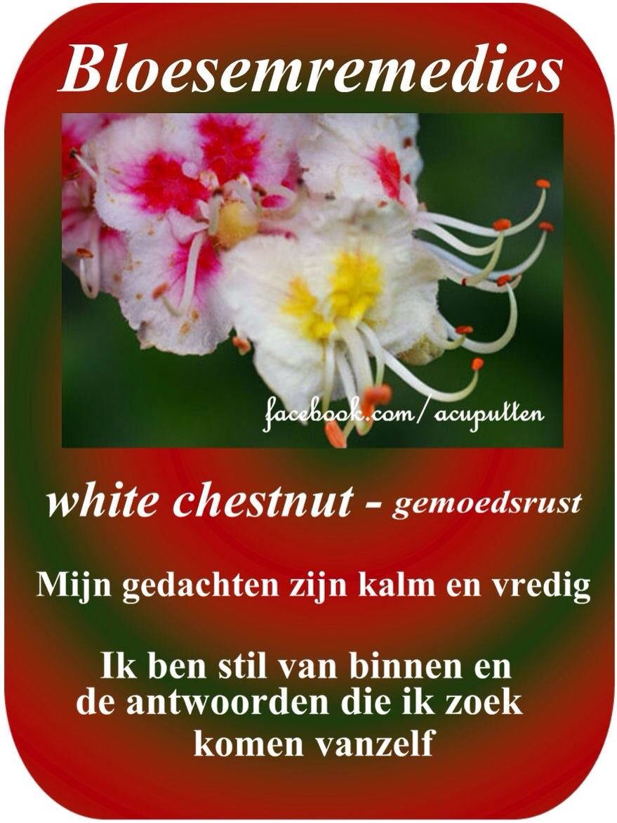 Bloesemremedies Flower Remedies White Chestnut Bach Flower
