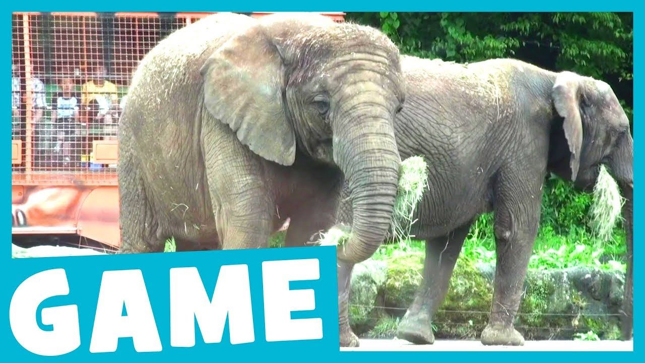 Learn Zoo Animals What's That Sound? Game for Kids