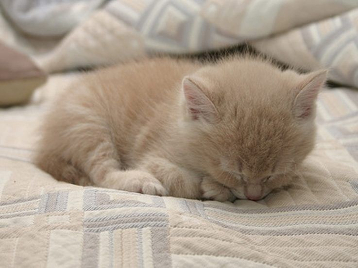 How To Get Rid Of Fleas On Young Kittens Newborn Kittens Cat