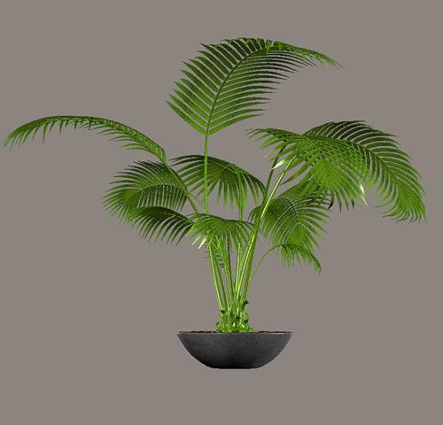 woonkamer accessoires poser tubes pinterest plantes vertes plantes et vert. Black Bedroom Furniture Sets. Home Design Ideas