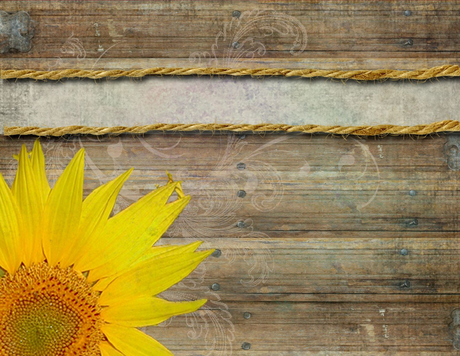 Abstract Yellow Sunflower Background Vector Ilration Template
