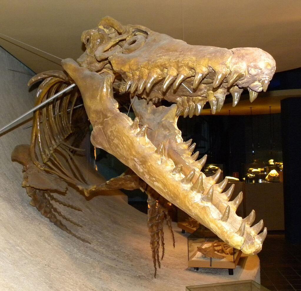 Mark A. Wilson on Fossils, Prehistoric animals