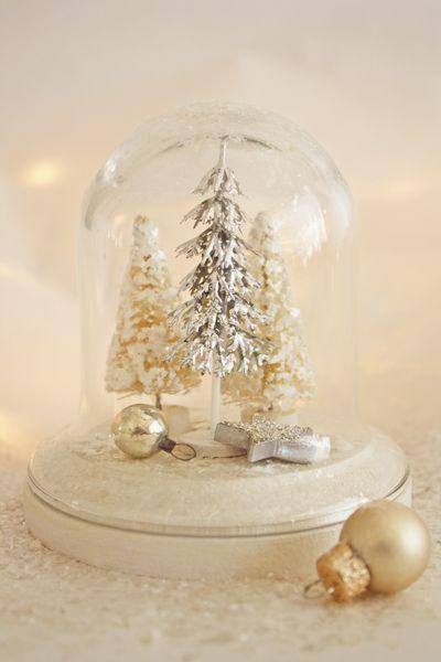 winter trees in cloche