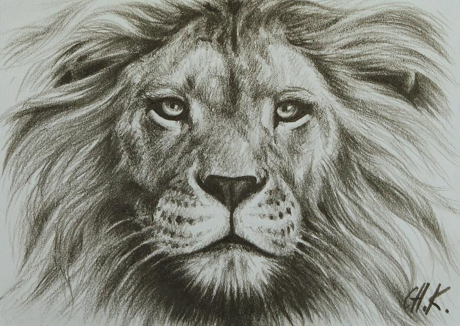 Easy Lion Pencil Drawing drawing | Lion Image D...