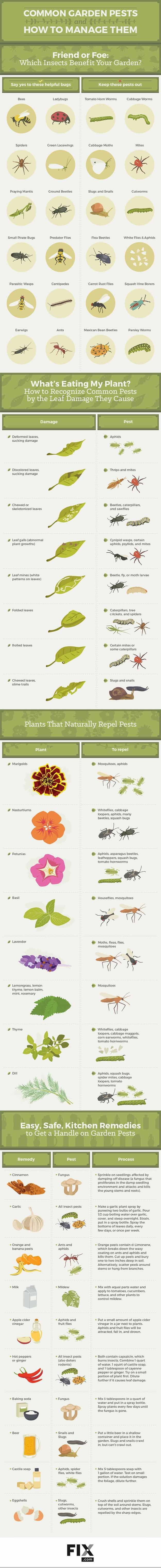 common garden pests and how to manage them infographic natural