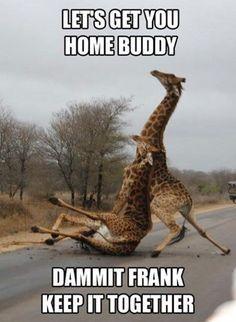 125afd1481ebc051a6f826e4a10e4668 funny animal memes pinterest image memes at relatably com tiny,Hilarious Animal Memes