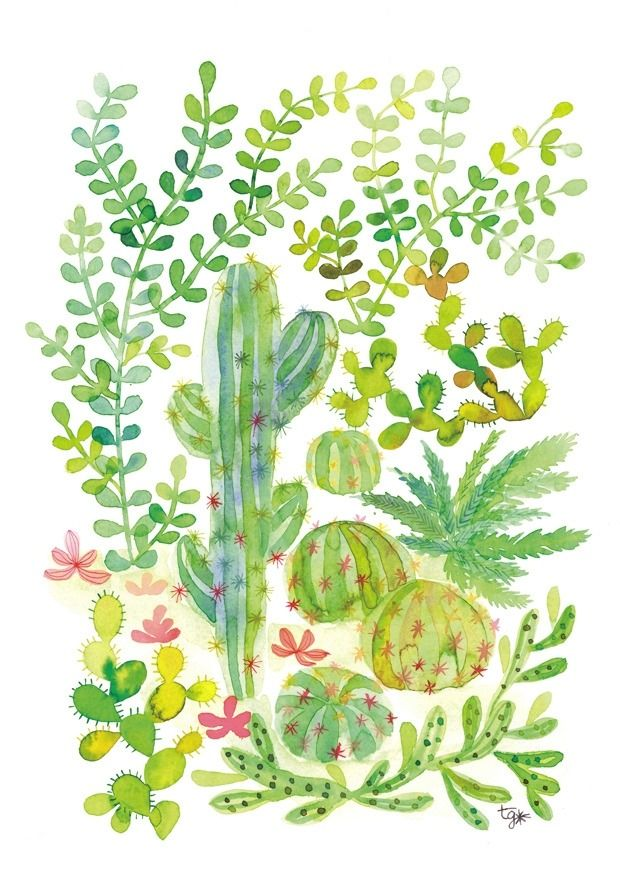 Illustration Aquarelle Jungle Cactus Et Plantes Grasses En