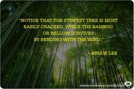 Image result for bamboo bending in wind