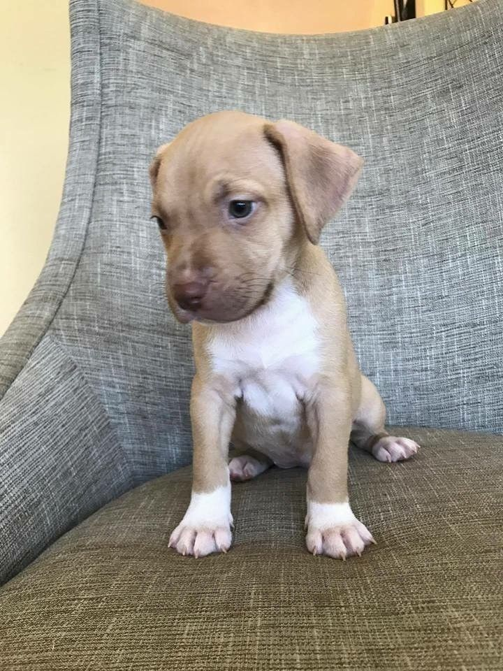 Pictures Of Holly A Mixed Breed Medium For Adoption In Concord