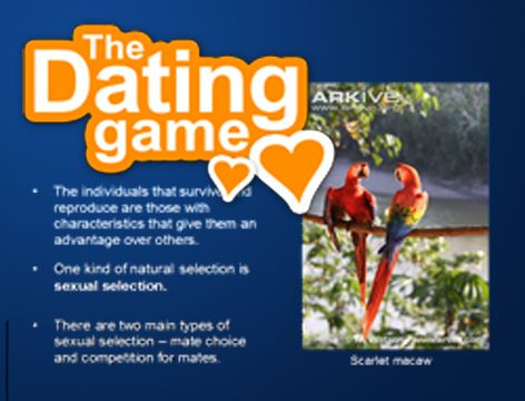 tamil matchmaking software free download