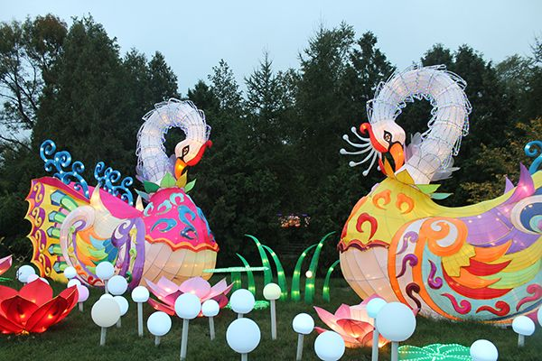 125be755889731ddabefcab093ed222a - Chinese Lantern Festival Boerner Botanical Gardens