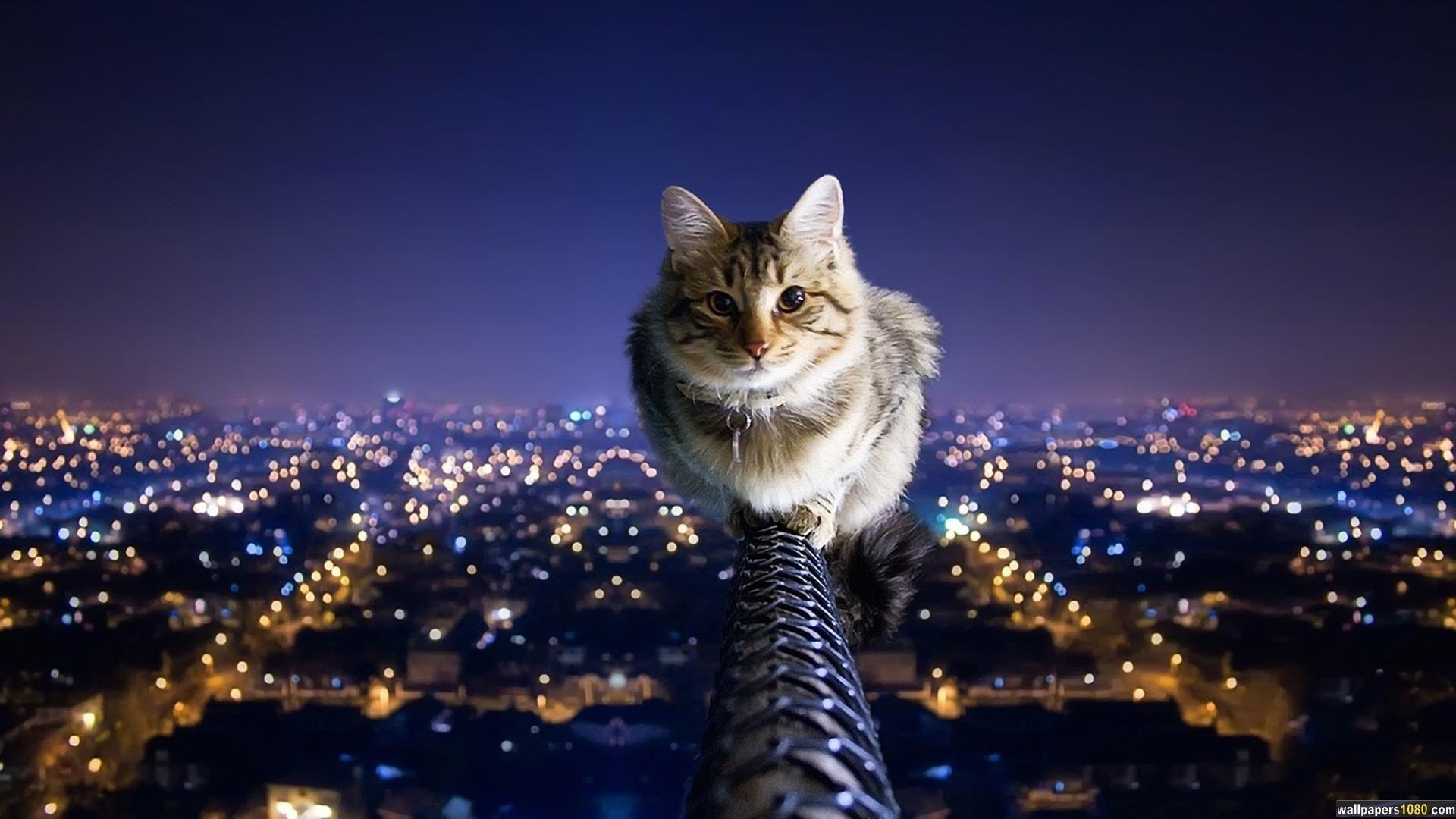 Cat Animal Windows 10 Wallpaper Cat Symbolism Cat Wallpaper Cats