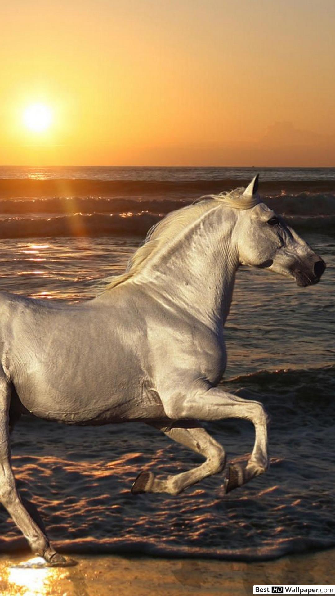 Horse Wallpaper Download Horse Wallpaper Horses Horse Background Horse wallpaper hd full screen download