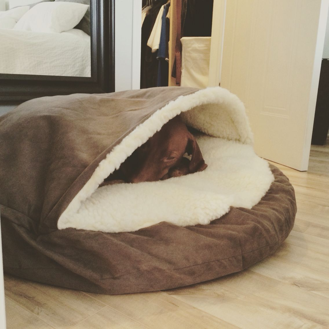 Cozy Cave Best Vizsla Bed Cool Dog Beds Vizsla Dogs Vizsla
