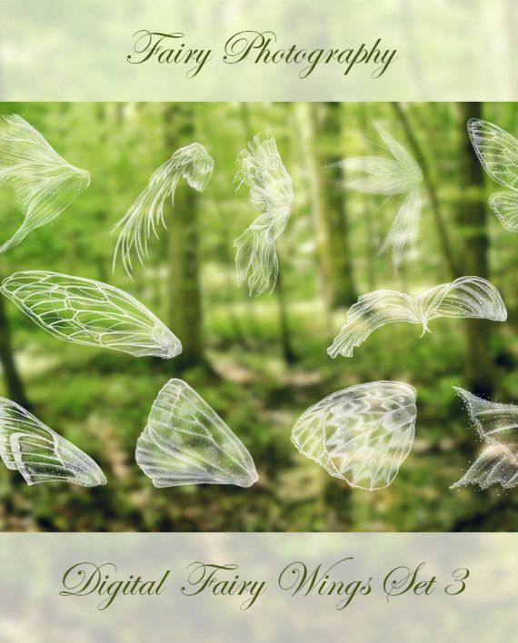 Fairy Wing Photoshop Brushes Set 3 4 Butterfly Wings 2 Feathered