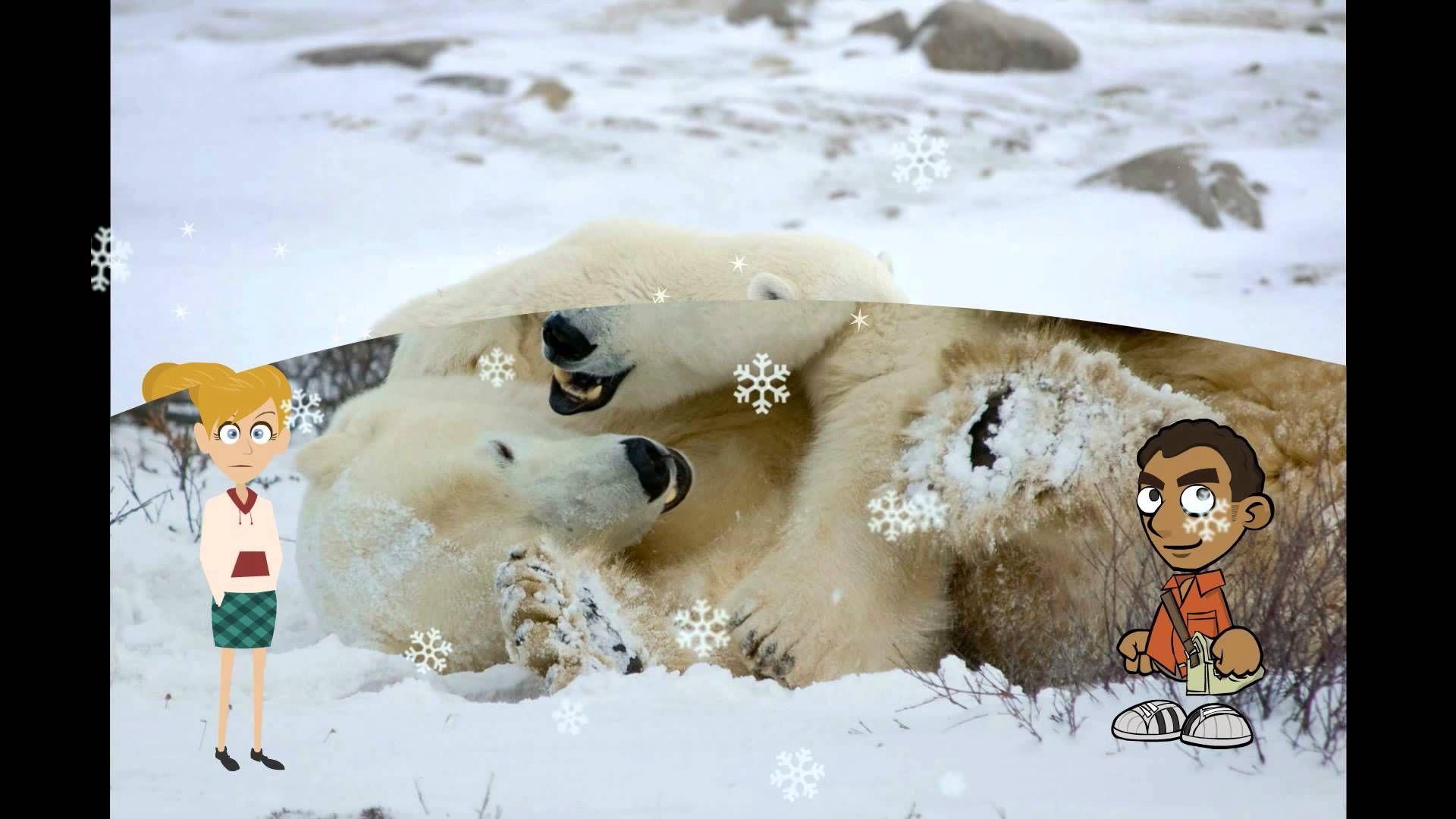 Fun Facts About Polar Bear