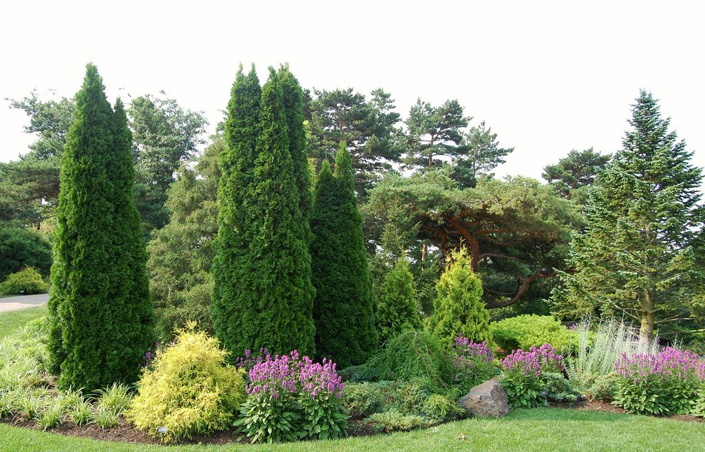 Conifer Garden Ideas mixed evergreen tree screen conifers Chicago Botanic Garden The Dwarf Conifer Garden Flickr Photo Sharing