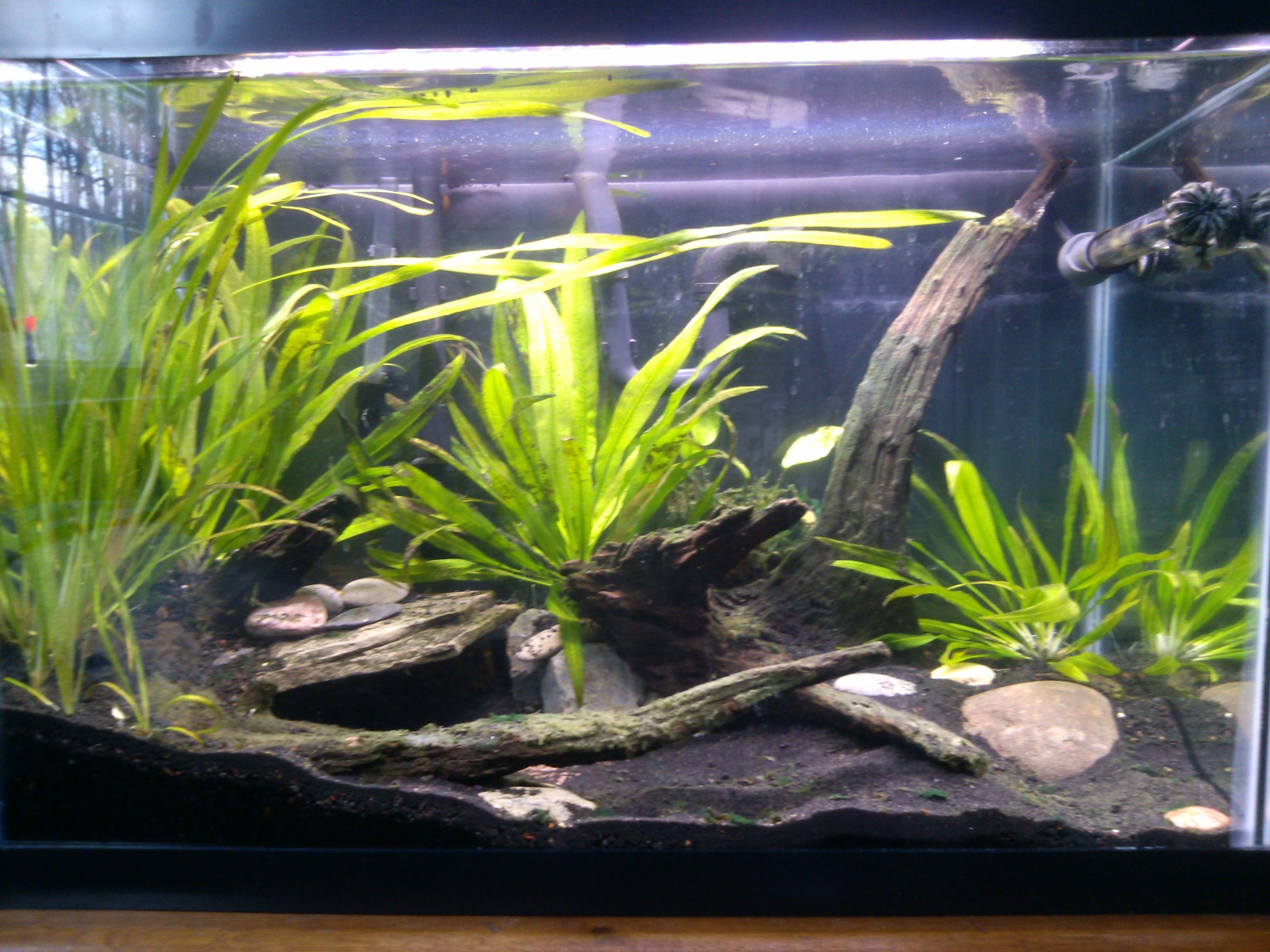Very Natural Looking Like A Lakebed Dark Substrate Some Wood Stones Nothing Over The Top Aquascape Wood Stone Aquarium