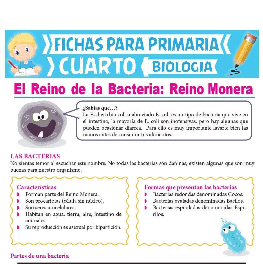 Clases De Bacterias Con Su Nombre