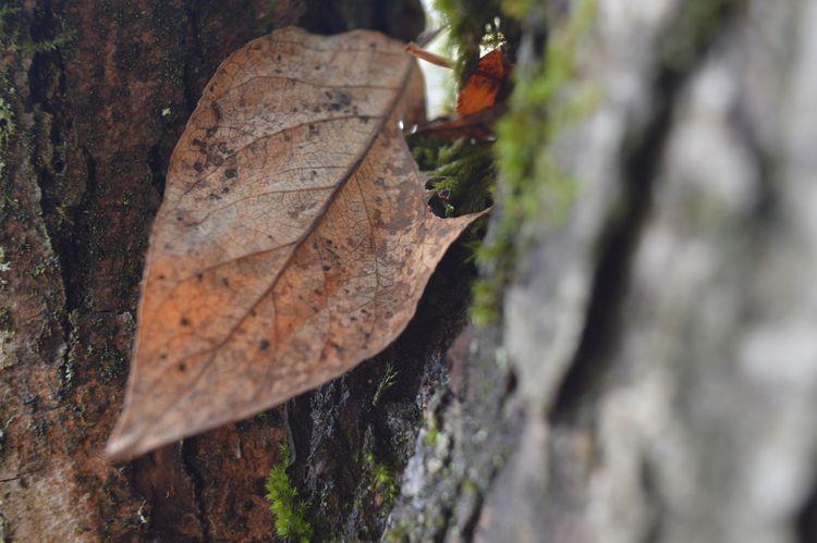 Why Tree Leaves Die Or Turn Brown Plant Leaves Turning Brown Plant Leaves Plant Leaves Turning