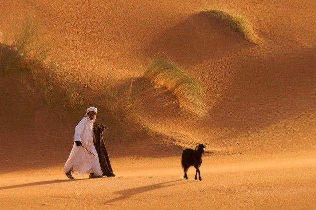 Woestijngeit (gemaakt in Zuid Sahara en oases)