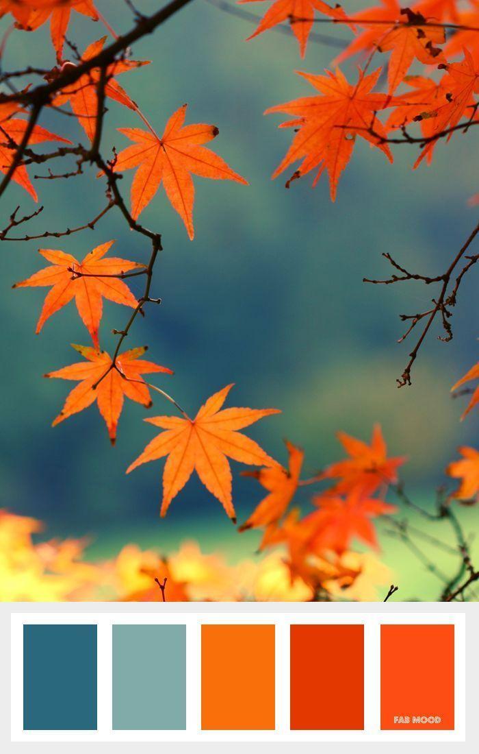 Shades of orange + Burnt orange and Teal Autumn Color Palette