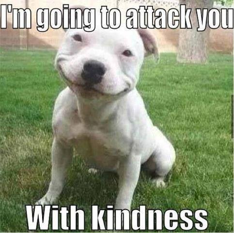 Pitbull attacks with kindness  memes   Adore❤️a❤️Bull
