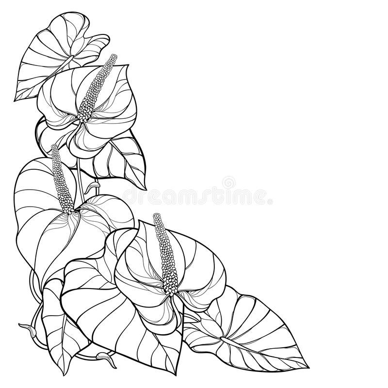 Vector Corner Bouquet Of Outline Tropical Plant Anthurium Or Anturium Flowers Bunch And Leaves In Black Isolated On In 2020 Bunch Of Flowers Tropical Plants Anthurium