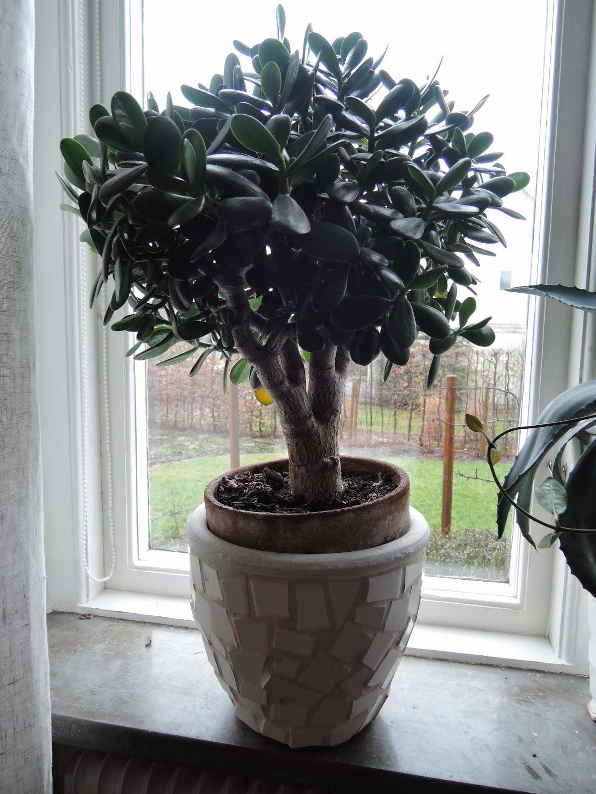 Houseplants Besk Ra Paradistr D