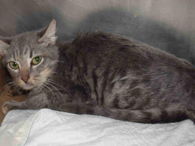 A1097261 Bing Pets Kitten Adoption Cat Adoption