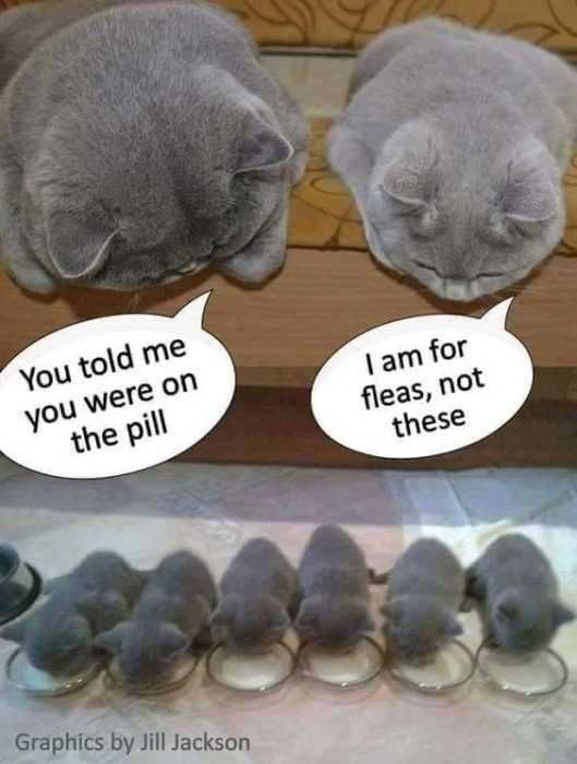 40 Hilarious Animal Pictures That Are Priceless