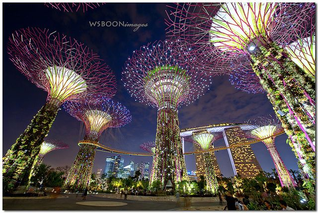 Supertree Grove Gardens By The Bay_5509 Gardens by the
