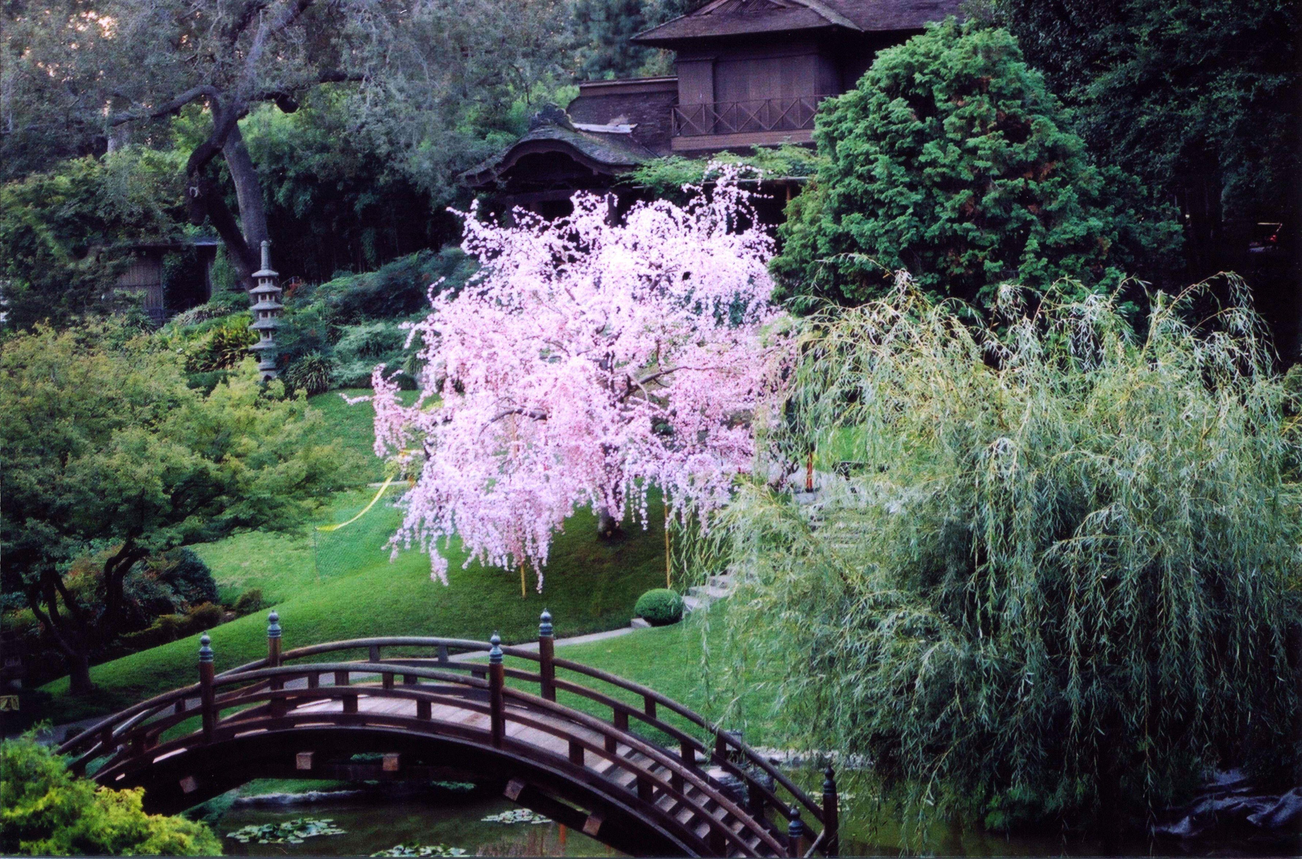 Fabricated Cherry Blossom Movie Star Tree Plants Italian Cypress Trees Plant Companies