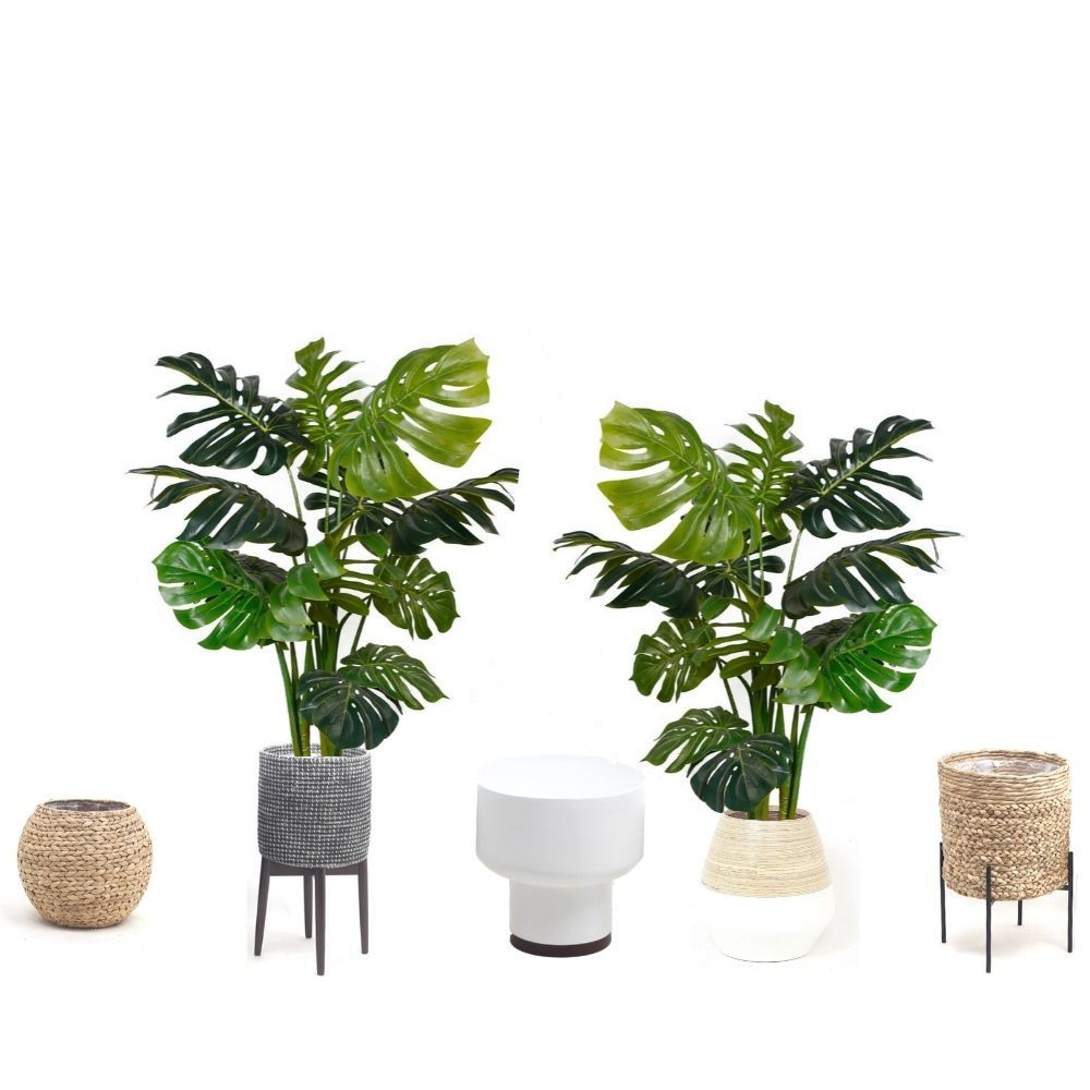 Our Mona Monstera Plant! Shop it now at www.artiplanto.com . . . . . . #bedroominspo #swoonworthy #bedroomdesign #bedroomgoals #bohoglam #glamourous #interiordesign #interiordesignideas #sodomino #interiorboom #styleithappy #livefabulousandfearless #luxuryinteriorsonabudget #howyouhome #howyouhome #ihavethisthingwithpink #abmlifeiscolorful #eclecticdecor #designinspiration #designdeinteriores #decoracioninteriores #interior4inspo #eclecticdecor #livingetcmag #livingetcuk #sassyhomestyle