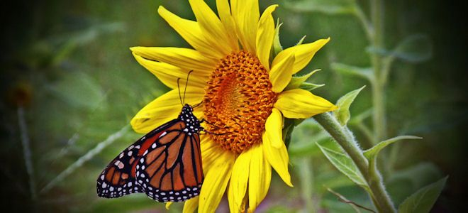 Butterflies:Where To Buy? Florida List