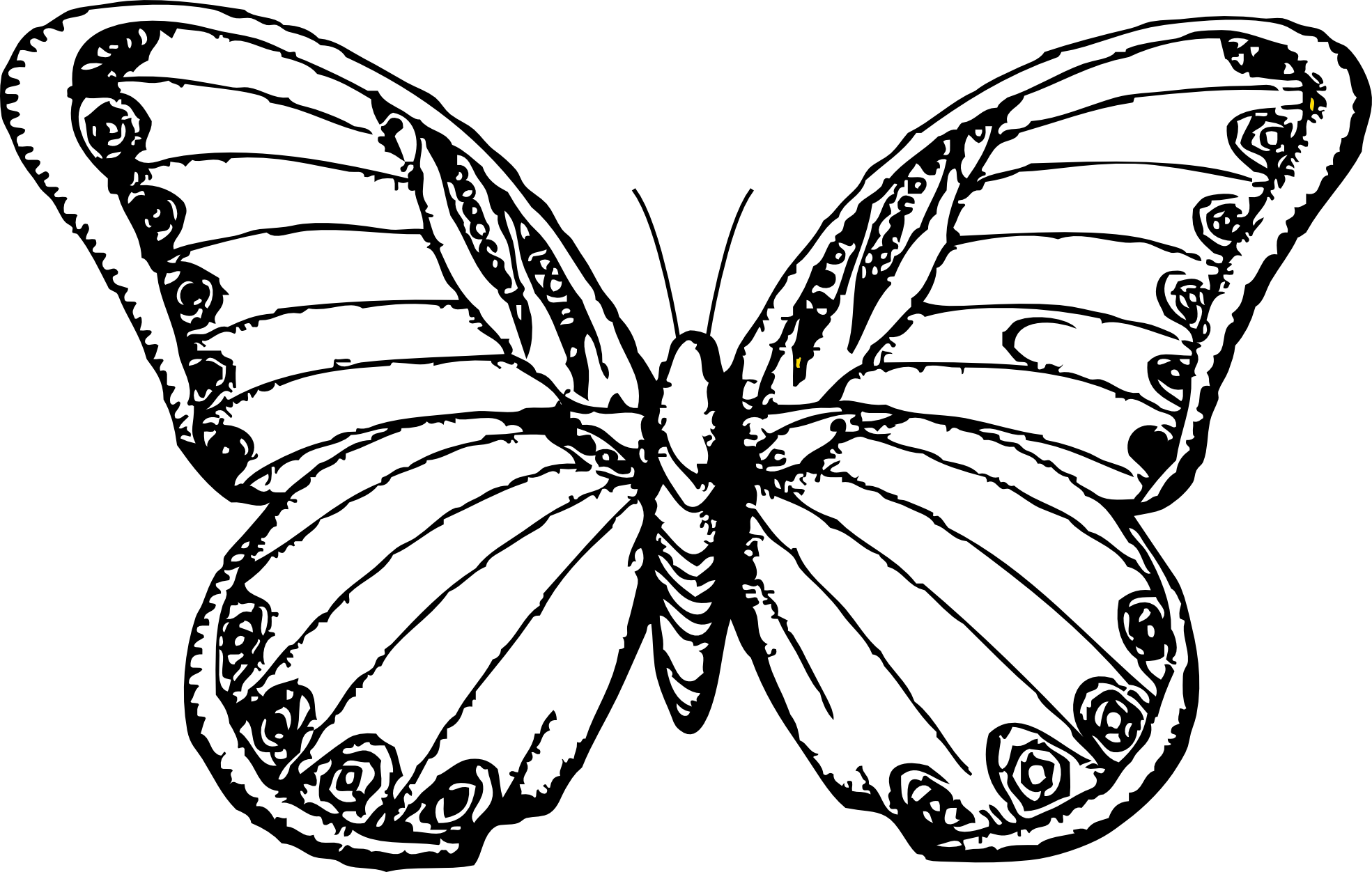 Clipartistfo Butterfly 25 Black White Line Art Svg