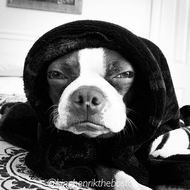 Nite Nite Instagram Friends  #bt #btcult #btlove #btofinstagram #bostonterrier #bostonlove #bostonterriercult #bostonterrierlove #bostonterriersofig #redbostonterrier #rescuedismyfavoritebreed #ilovemydog #ilovemybostonterrier #instapet #instadogs #pup #adoptdontshop #dogsofinstagram #kinghenrik #love #americangentleman #btmom #myboy #blackandwhite #ET #phone #home #babushka by kinghenriktheboston