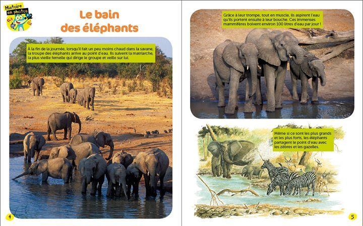 f0c6df468db3 Il fait chaud   Plongez dans le grand bain avec les éléphants ! Photos    Catherine
