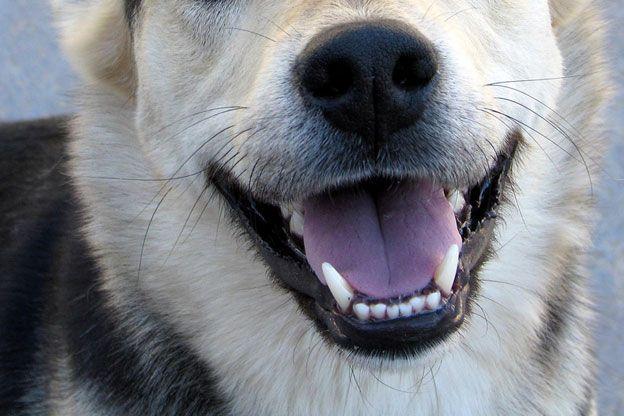dog_smile.jpg (624×416)